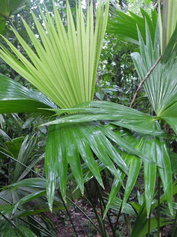 région semi tropicale Pérou