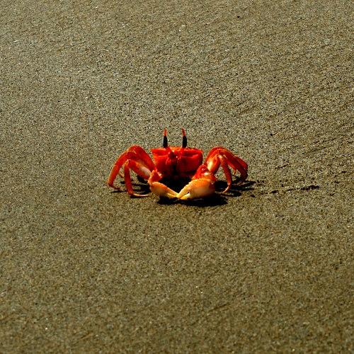 Échappée belle sur les plages de Máncora.