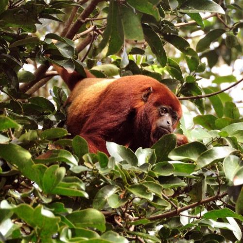Escapade à Tambopata
